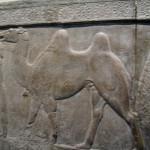 BM:asyrian camel driver